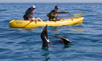 Sea_Kayaking_Trip_Hermanus