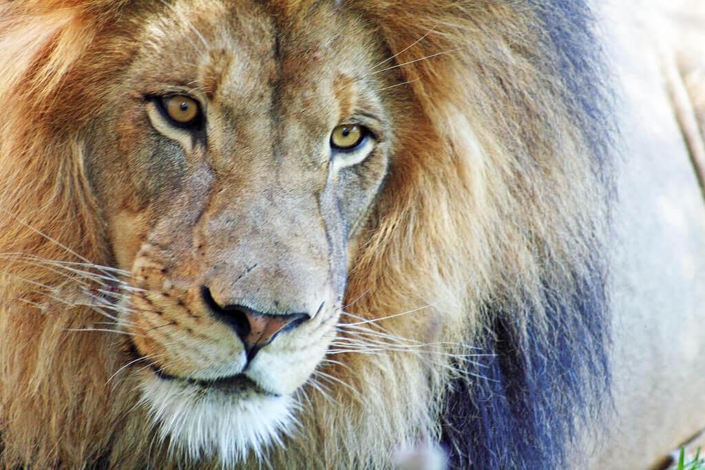 Cape_Town_Day_Safari