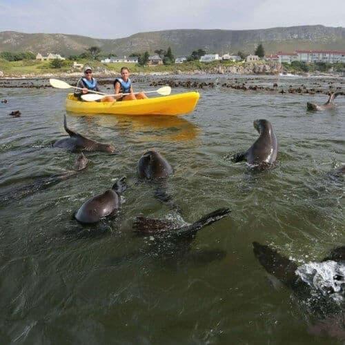Sea_Kayaking_Hermanus