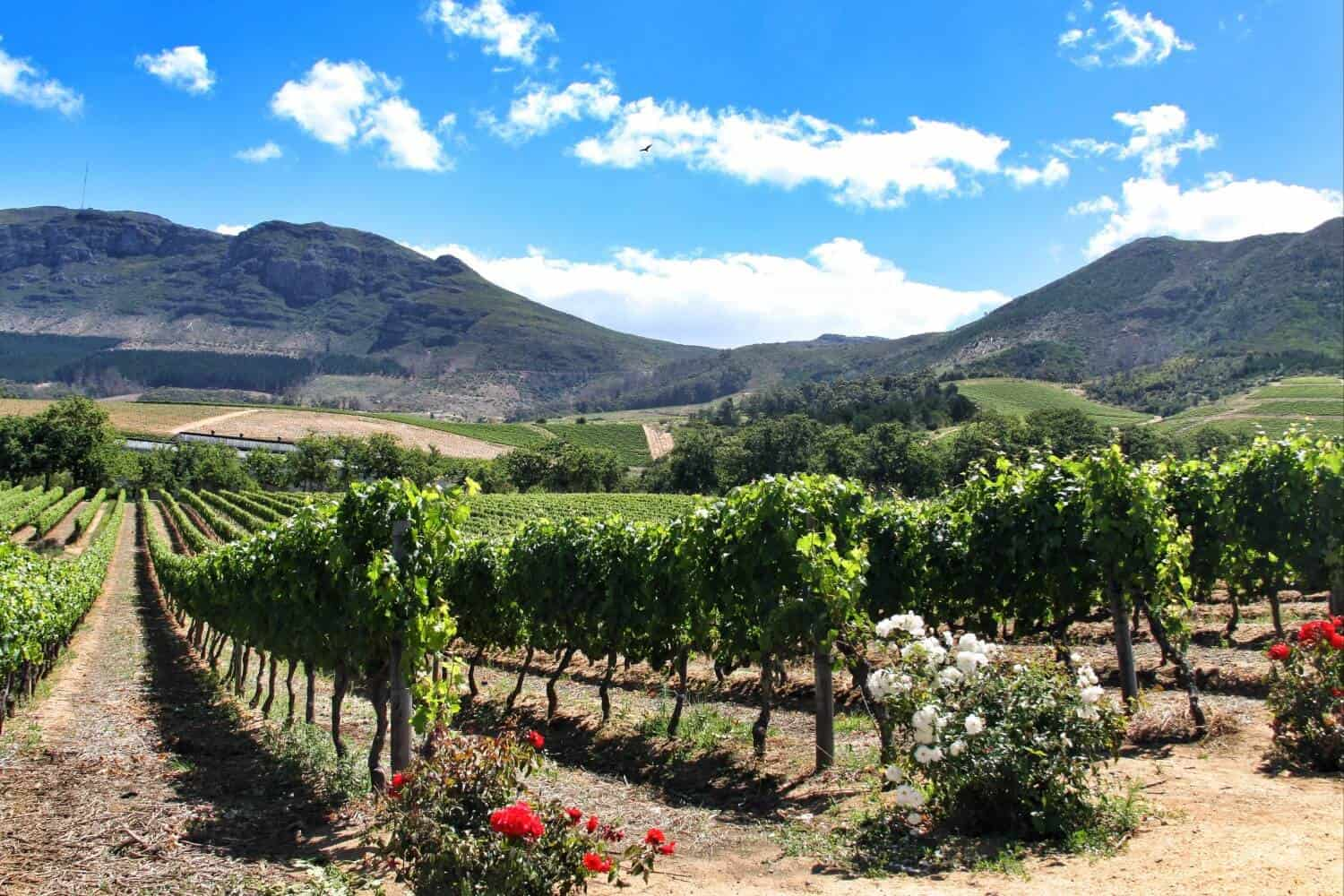 Cape_Town_Wine_Tours