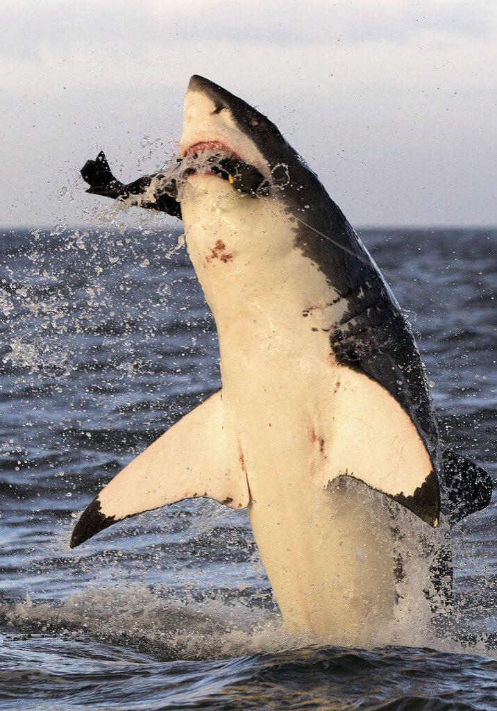 Shark_Cage_Diving_Cape_Town_False_Bay